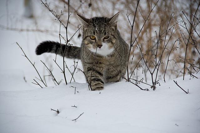 A défaut d'avoir de la neige chez moi, j'en mets ici.