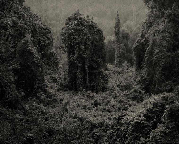 Kudzu, Photo de Helene Schmitz